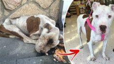 """""""고마워요! 경찰 아저씨"""" 죽어가는 개를 살린 LA 경찰국"""