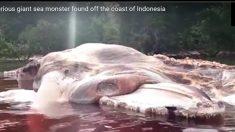 인도네시아에서 발견된 길이 15m 괴생물체의 정체는?
