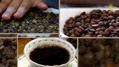 커피, 자연을 품다 [헬로우 코리아] 279회