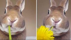 (영상) '토선생의 무심한 듯 시크한 먹방' 세상 맛있게 꽃 먹는 토끼
