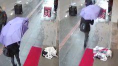 비 오는 날, 카페 입구에서 떨고 있는 개 보더니 머플러 덮어주고 총총히 떠난 터키 여성