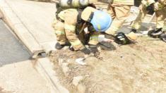 화재 연기로 숨 멎은 고양이, '심폐소생술'로 되살아나