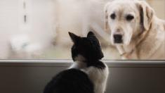 반려견이 매일 넋 놓고 창밖을 바라 본 이유…'이웃집 고양이'