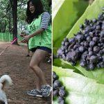 봄 산책길에 풀밭 '피마자 유박비료' 주의..강아지가 먹으면 중독