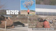예능 프로그램서 만난 시골 할머니 '인생사진' 찍어드리려 길바닥에 드러누운 여자 아이돌
