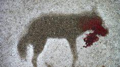 로드킬 당한 동물이 죽어가면서 세상에 남긴 마지막 흔적