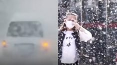 미세먼지 줄이려고 심은 나무 때문에 '꽃가루 지옥'된 중국 현재 상황