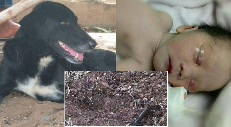 산책 중 흙에 묻힌 갓난아기 냄새 맡고 땅 파헤쳐 구해낸 '영웅' 강아지