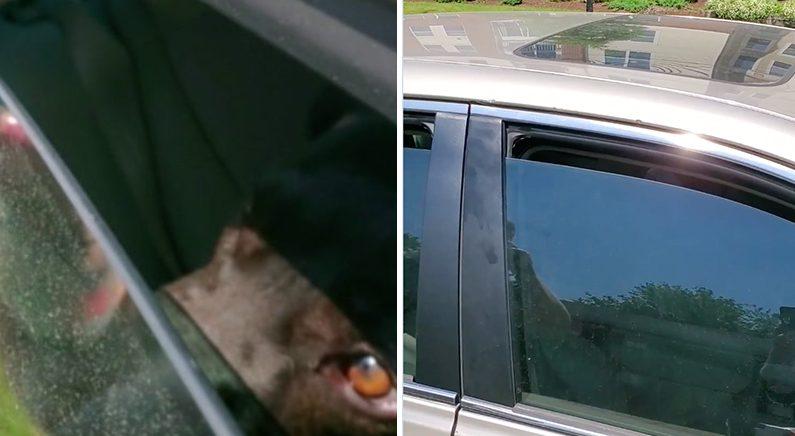 땡볕에 차에 갇혀 창문 틈으로 생수 2병 비운 강아지