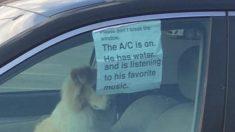 차 안에 혼자 남겨진 강아지 모범 사례