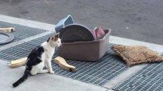 쓰던 물건이랑 같이 버려진 채 주인 떠난 길 끝 하루종일 바라보는 고양이