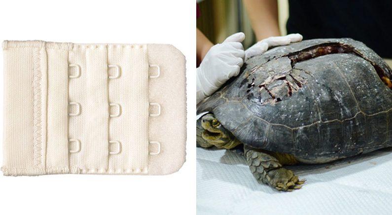 """""""후크 버리지 마세요"""" 차에 치인 거북이를 위한 특별한 요청"""