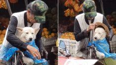 비 쏟아지자 같이 장 보러 나온 강아지 우비부터 입혀주는 할아버지 (영상)