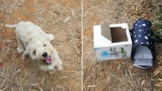 종이박스에 버려진 강아지는 자신을 구해준 사람 보며 해맑게 웃었다
