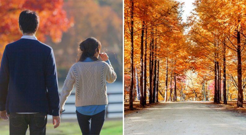 """""""여름아 잘 가라"""" 좋은 사람과 '선선한 바람' 맞으며 걷기 좋은 '가을'이 온다"""