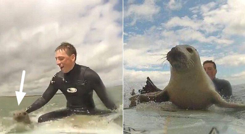 """""""서핑하는데 아기 바다표범이 자꾸 제 서핑보드를 탐내요"""" (영상)"""