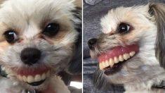 주인이 잠든 사이에 '틀니' 갖고 놀며 '잇몸 미소' 발사한 강아지