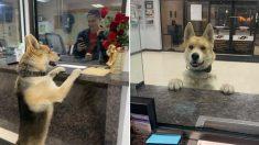 주인 잃어버리자 도와 달라며 경찰서 찾아가 신고한 강아지