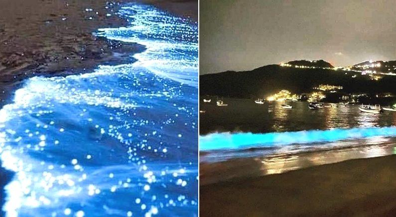 세계 최고 휴양지 바닷가에 사람 출입 막았더니, 60년 만에 바다가 빛을 내기 시작했다