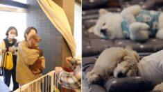 단체 낮잠부터 각종 놀이까지, '강아지 유치원'의 보람찬 하루