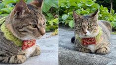 '엄중한 경고문' 붙이고서 길거리 활보하는 동네 고양이