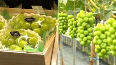 이번 추석 선물계를 평정한 우리나라 고유의(?) 과일
